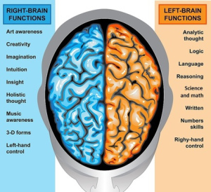 two side brain (2)